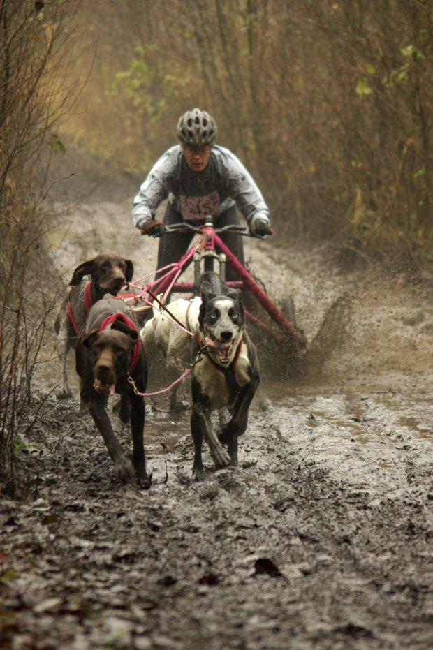 SLONSKO MARAS GONITWA. Bikejoring - wyścigi psich zaprzęgów z rowerami