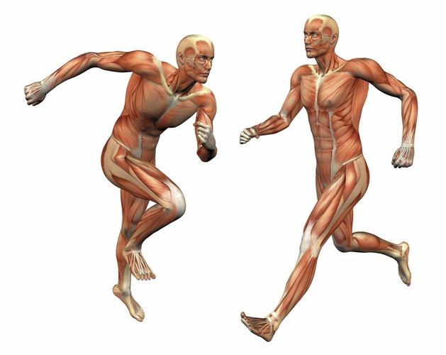 Jak pracuje ciało podczas biegu?