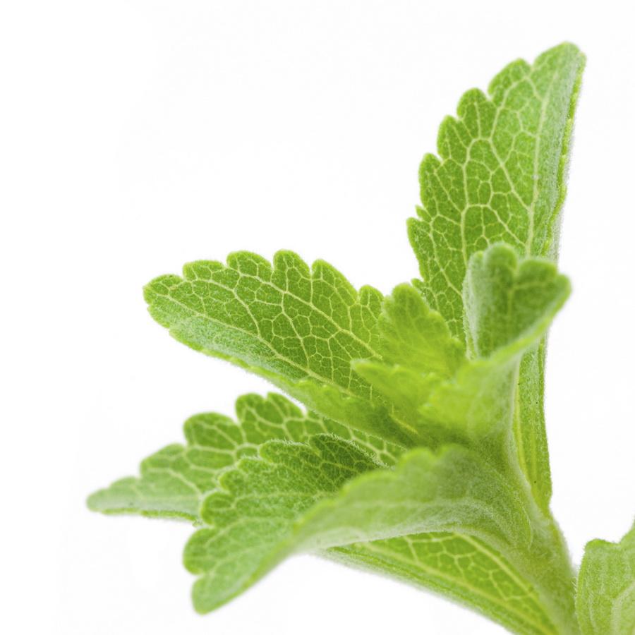 Stewia - roślina, która zawiera związki chemiczne 200-300 razy słodsze od cukru. Fot. istockphoto.com
