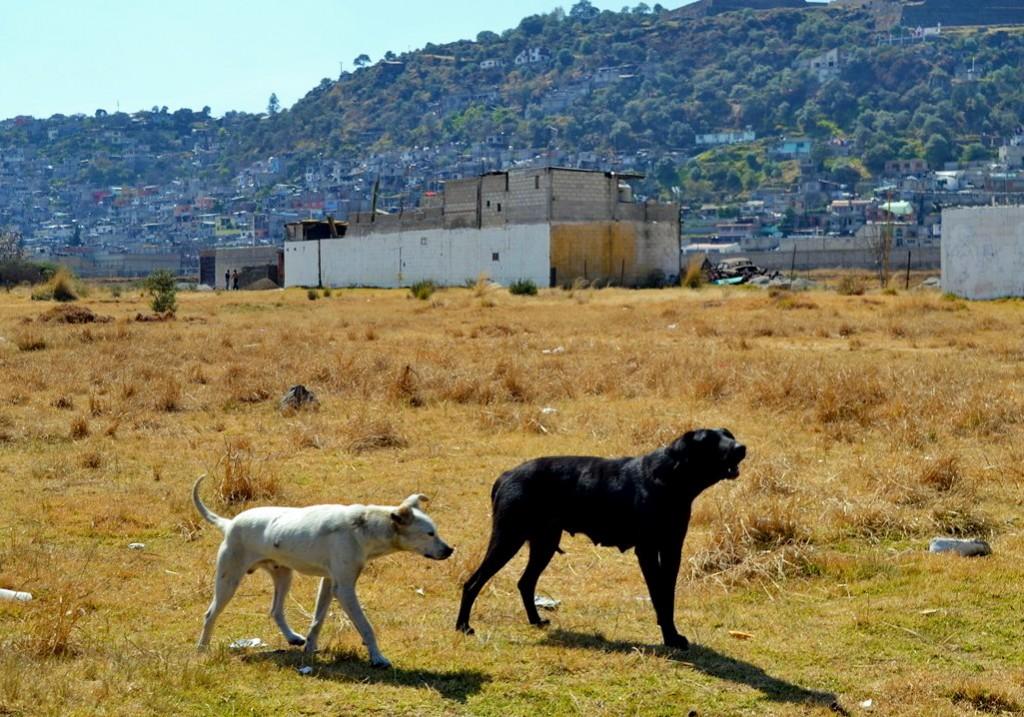 Dominika i Karol Nowakowscy na obozie wysokogórskim w Meksyku. W Meksyku jest mnóstwo bezpańskich psów, na szczęście nie gryzą i żyją swoim życiem blisko ludzi. Fot. Karol Nowakowski