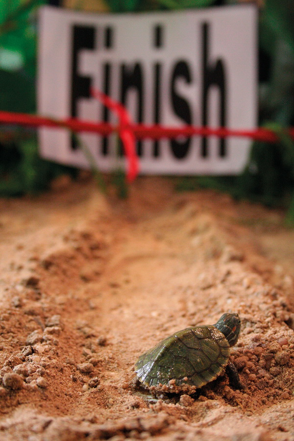 Finisz biegu. Fot. Getty Images