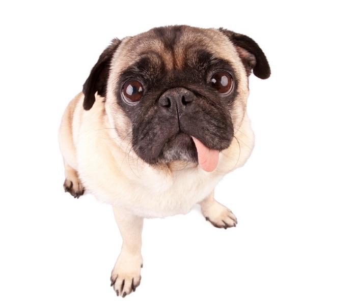 Biegowe wymówki. Pies. Fot. istockphoto.com