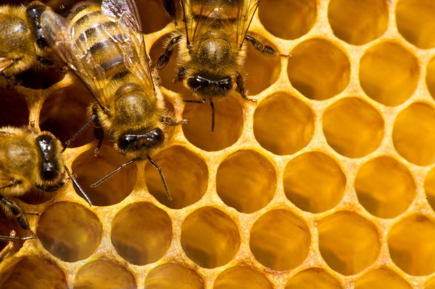 Produkty pszczele dla biegaczy. Fot. istockphoto.com