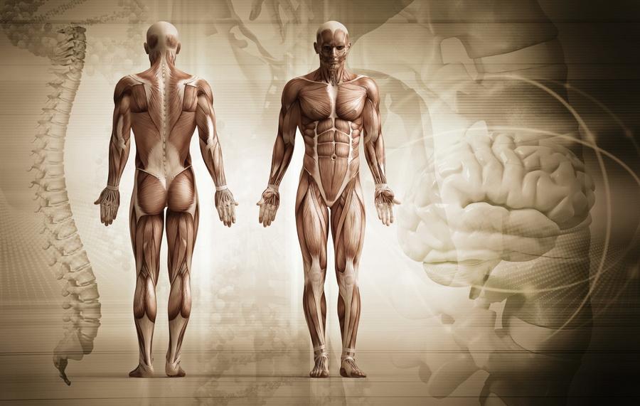 Mięśnie biegacza. Fot. istockphoto.com