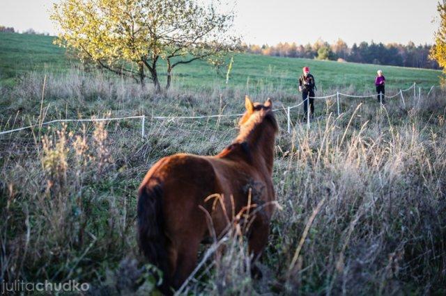 łemko konie