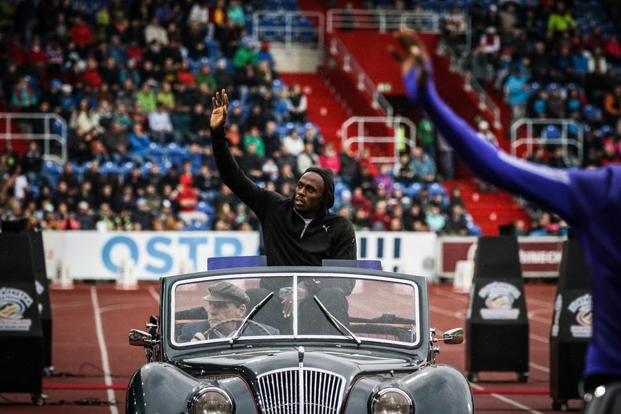 Bolt w furze