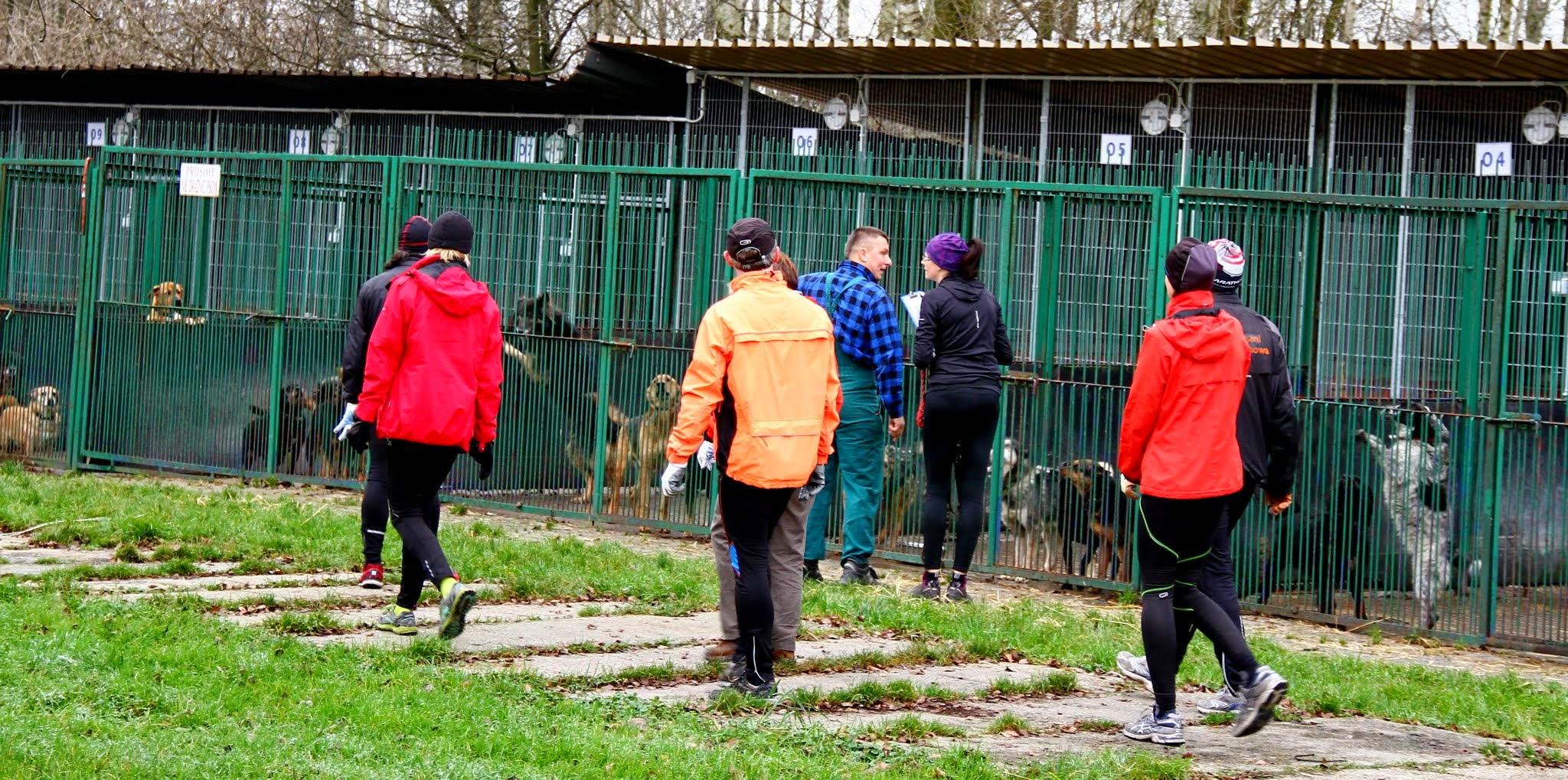 Dog Running. Fot. Marek Tęcza 01