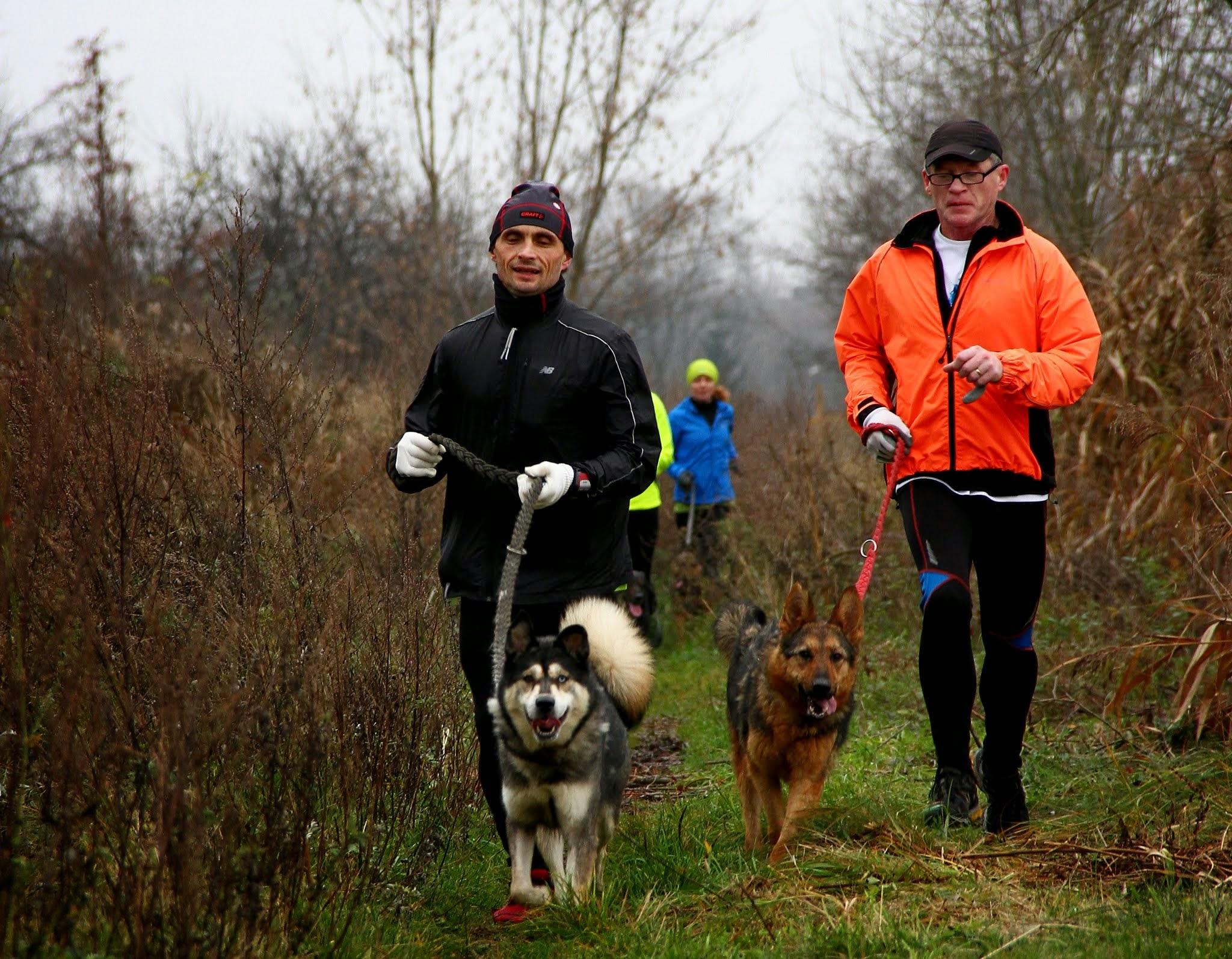 Dog Running. Fot. Marek Tęcza 04