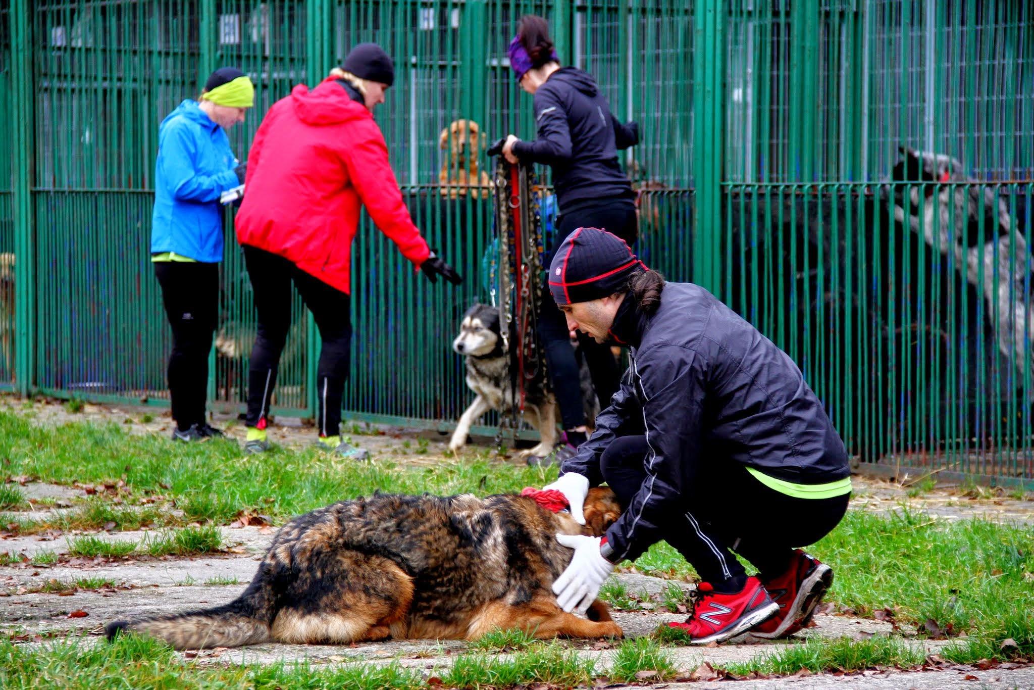 Dog Running. Fot. Marek Tęcza 06