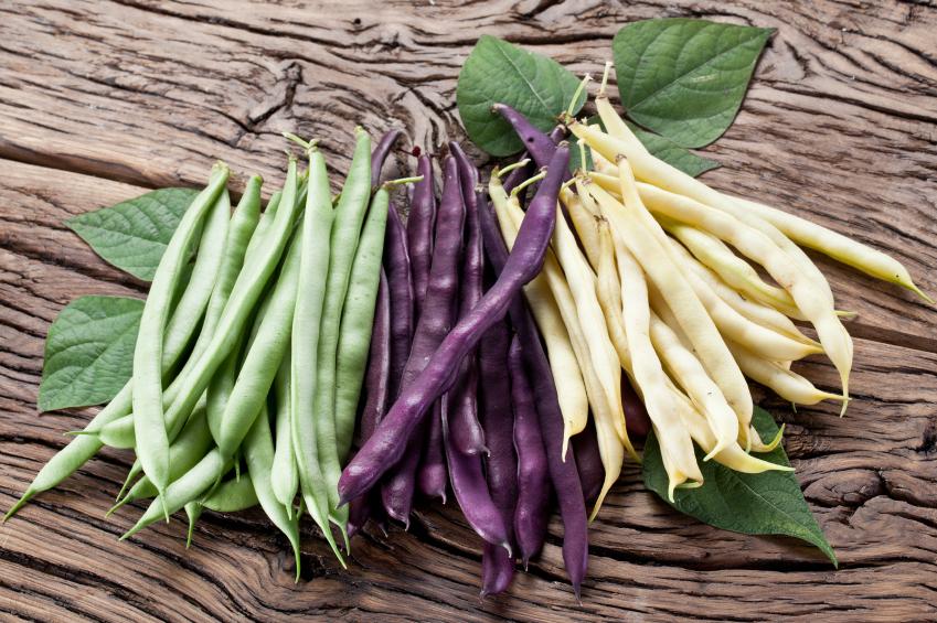 Fasolka szparagowa w trzech kolorach. Fot. Istockphoto.com