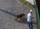 Piotr Kuryło porzucił psa przed wyprawą na Spartathlon