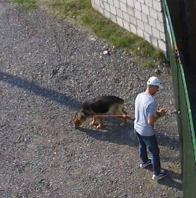 Piotr Kuryło porzuca psa