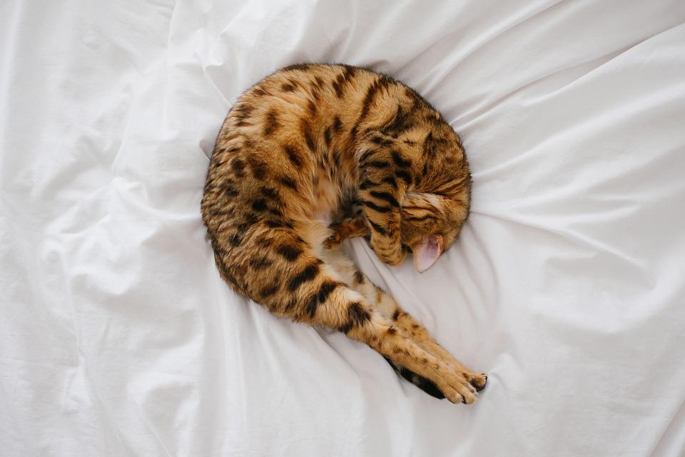 cat-2562314_960_720