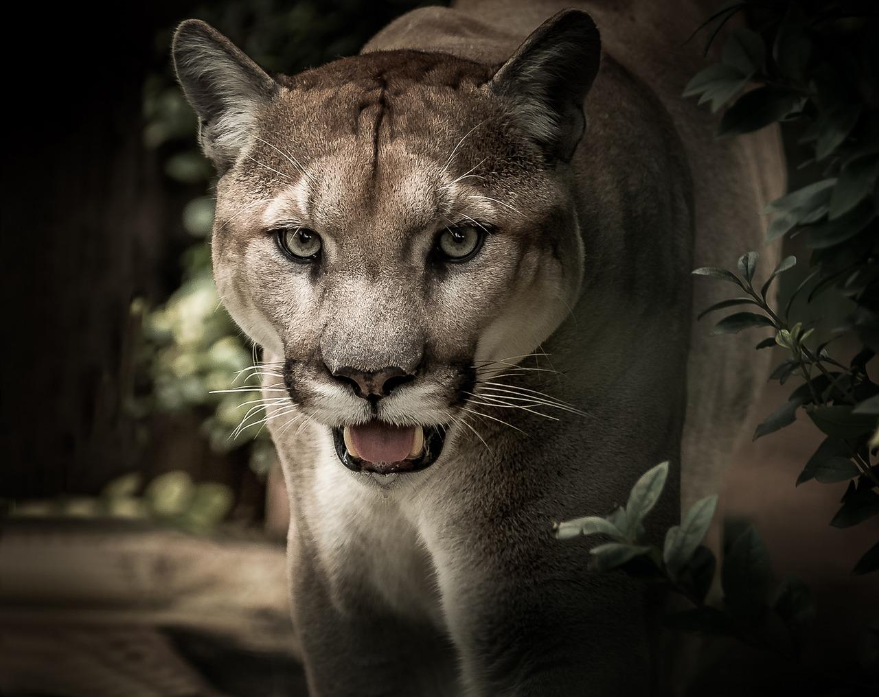 Puma Archives Magazynbieganiepl Najlepsza Strona Biegania